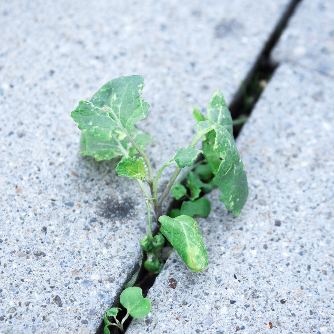 Our Cultivate Business Consulting program represented by Wild plants growing from a stone floor